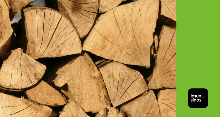 Você sabe quais são as madeiras mais resistentes aos cupins?